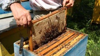 Beekeeper working on beehive — Vidéo