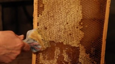 Beekeeper unseal honeycomb — Stock Video