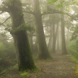 Misty forest way in Japan — Stock Photo #12686527