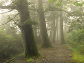 Misty forest way in Japan — Stock Photo