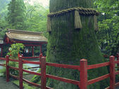 Japanese temple — Photo