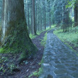 Royalty-Free Stock Photo: Nikko pathway