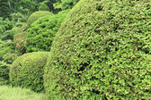 Green bushes — Stock Photo
