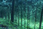 Deep twilight forest — Stock Photo