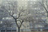 City tree — Stock Photo