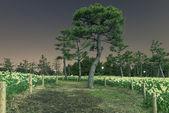 Noční park — Stock fotografie