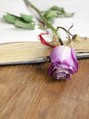 Open book and dry rose — Stock Photo