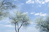 Cielo di primavera — Foto Stock