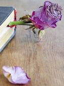 Sušené růže v knize — Stock fotografie