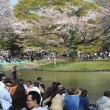 Cherry Blossom-Saison in Tokio — Stockfoto #20414295