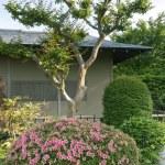 ogrod japoński — Zdjęcie stockowe #21025449