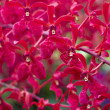 Red orchids — Stock Photo