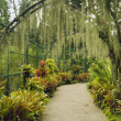 Stock Photo: Singapore Botanical Garden
