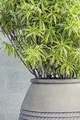 Decoration plant — Stock Photo