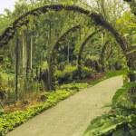 Singapore Botanical Garden — Stock Photo