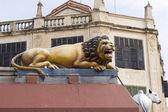 Hindu lion — Stock Photo