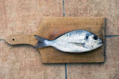 Dourada fish — Stock Photo