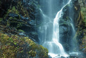 Forest waterfall — Photo