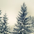 Winter fir — Stock Photo #38247079