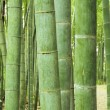 Green bamboo forest — Stock Photo #42310281