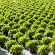 Green plants — Stock Photo