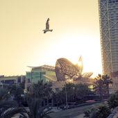 Barcelona seagull — Stock Photo
