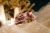 Vánoční strom na korálovém — Stock fotografie