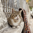 Stock Photo: Cats of Istanbul 8