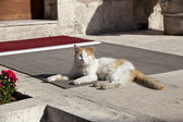 The Cats of Istanbul 4 — Stock Photo