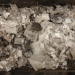 Stock Photo: Burnt paper ashes