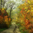 Foto Stock: Colorful autumn