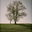 Stock Photo: Tree silhouette roadside