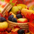 Basket of autumn fruits — Stock Photo