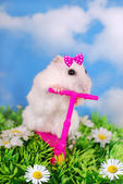 White hamster riding on a scooter — Zdjęcie stockowe