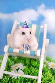 Comemorando aniversário de hamster branco — Foto Stock