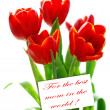 red tulips in sunlight isolated on white for mom — Stock Photo