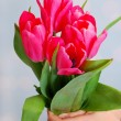 Hands holding a bouquet of pink tulips — Stock Photo