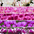 Rainbow colors tulips collage — Photo