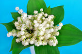 Lily of the valley bunch on blue background — Stock Photo