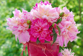 Bunch of beautiful peony in the garden — Stock Photo