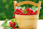 Fresh red currant in wooden basket — Stock Photo