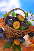 Fresh plums in the basket — Stock Photo