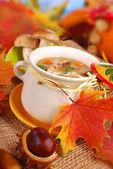 Autumn porcini mushrooms soup — Stock Photo