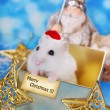 Merry christmas from hamster — Stock Photo #36902467