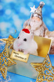 Merry christmas from hamster — Stok fotoğraf