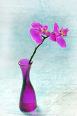 Pink orchid in vase — Stock Photo