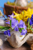 Egg shell with spring flowers  for easter — Stock Photo