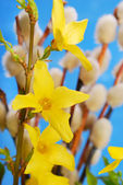 Forsythia flowers and catkins — Stock Photo