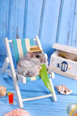 Funny hamster relaxing on summer holidays — Stock Photo