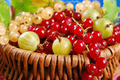 Basket of fresh red,white currant and gooseberry — Stock Photo